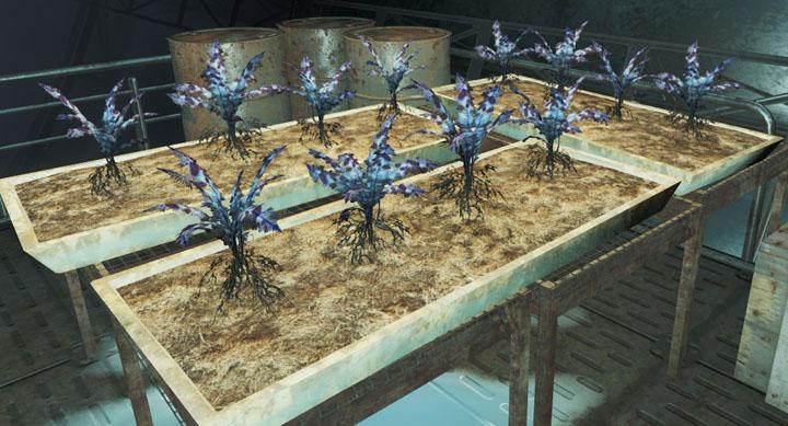 Nirnroot (Experimental Plant) - Fallout 4 Easter Eggs